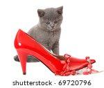 British Gray Kitten With Red...
