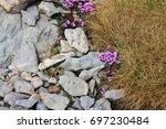 Small photo of Pink wildflowers photographed on top of Mount Santis. Alpine azalea, Switzerland