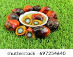close up of fresh oil palm... | Shutterstock . vector #697254640