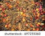 close up of fresh oil palm... | Shutterstock . vector #697255360