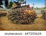 close up of fresh oil palm... | Shutterstock . vector #697255624