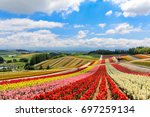 colorful flower field in sunny... | Shutterstock . vector #697259134