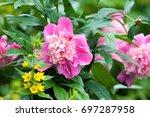 peony flower clipart digital