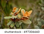 flora of the iguaque fauna and... | Shutterstock . vector #697306660
