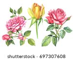 set yellow and red roses ... | Shutterstock . vector #697307608