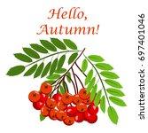 rowan bunch berries red ripe... | Shutterstock .eps vector #697401046
