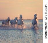 white horses run gallop in the... | Shutterstock . vector #697410334