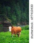 vibrant orange cow grazes on a... | Shutterstock . vector #697410430