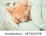 Stock photo little red kitten the kitten lies on the fluffy carpet at home little kitten sleeps close up of 697452478