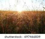 Dawn In The Field  Tall Grass...