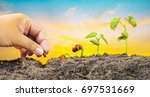 agriculture and new life... | Shutterstock . vector #697531669