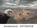 Grand Canyon Bald Eagle
