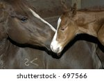mare and colt | Shutterstock . vector #697566