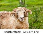 portrait of the sheep | Shutterstock . vector #697574170