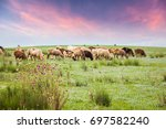 the flock is in the pasture | Shutterstock . vector #697582240