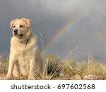 Dog Best Friend  Rainbow Happy...
