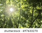 the sun shines down at the... | Shutterstock . vector #697633270