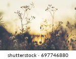 beautiful natural flowers with... | Shutterstock . vector #697746880