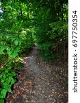 Small photo of Forest path