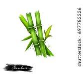 bambusa or bamboos ayurvedic... | Shutterstock . vector #697782226