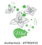mint sketch set vector...   Shutterstock .eps vector #697806910