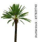 Palm Tree Isolated On White...