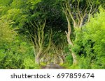 the dark hedges in armoy co.... | Shutterstock . vector #697859674