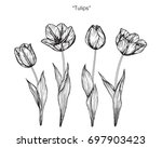 Hand Drawn And Sketch Tulips...