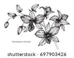 hand drawn and sketch orchid... | Shutterstock .eps vector #697903426