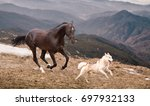 Stock photo the dark brown horse run with the dog on the mountains background 697932133