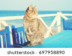 odessa cats. cute gray cat with ... | Shutterstock . vector #697958890