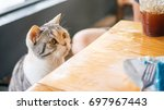Stock photo cute cat looking at food on a wooden table 697967443