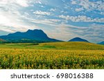 fields with blooming sunflower. ... | Shutterstock . vector #698016388