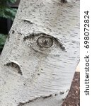 birch tree close up looks like... | Shutterstock . vector #698072824