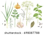 watercolor fresh herbs and... | Shutterstock . vector #698087788
