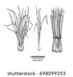 lemongrass drawing. isolated... | Shutterstock . vector #698099353