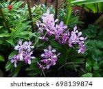 Flowers In Singapore Botanic...