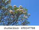 Flowers And Clear Sky On...