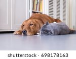 british shorthair cats and...   Shutterstock . vector #698178163