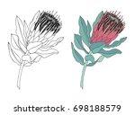 protea flower vector... | Shutterstock .eps vector #698188579
