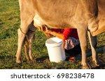 squeeze milk in the pasture | Shutterstock . vector #698238478