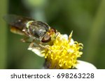 Hoverfly  Fly Flower Or Serpen...