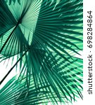 tropical palm foliage on white... | Shutterstock . vector #698284864