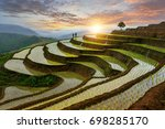 Rice Terrace Rice Field Of...