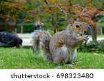 Squirrel Surprised By The...
