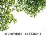 green leaves isolated on white... | Shutterstock . vector #698328046
