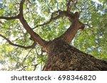 big tree | Shutterstock . vector #698346820