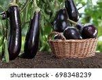 Basket Full Of Eggplants On The ...