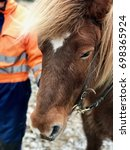 Small photo of The Icelandic Horse - Equus ferus caballus