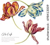 Stock photo watercolor vintage tulips colorful tulips on white background botanical art 698413009